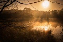 Gouden zonsopgang Stock Foto