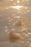Gouden zonsopgang en nautilusshells Royalty-vrije Stock Fotografie