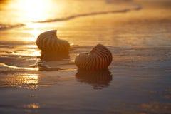 Gouden zonsopgang en nautilusshells in het overzees Royalty-vrije Stock Afbeeldingen