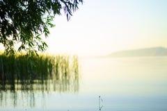 Gouden zonsopgang op het meer, boomtakken boven het meer stock foto