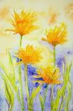 Goudsbloem met een de zomergevoel Stock Fotografie