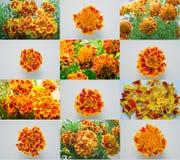 Goudsbloemen royalty-vrije stock afbeeldingen