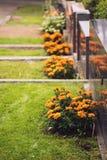 Goudsbloemen naast graven in een fins kerkhof worden geplant dat stock foto's