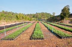 Goudsbloemjonge plant Royalty-vrije Stock Afbeelding