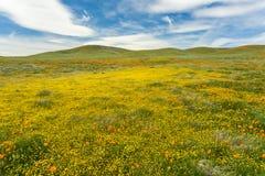 Goudvelden die op de heuvels, Californië bloeien stock foto