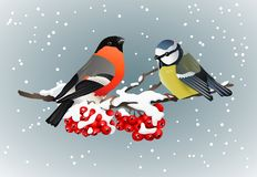 Goudvink en meeszitting op snow-covered tak van de aardillustraties van de lijsterbeswinter Stock Fotografie