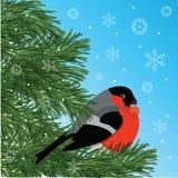 Goudvink met lijsterbessenzitting op naaldboomtak, blauwe achtergrond en sneeuwvlokken, vectorillustratie Royalty-vrije Stock Afbeeldingen