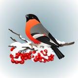 Goudvinkzitting op sneeuw behandelde tak van lijsterbes De aard van de winter Vector illustratie Royalty-vrije Stock Afbeeldingen