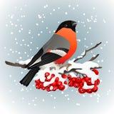Goudvinkzitting op sneeuw behandelde tak van lijsterbes De aard van de winter Vector illustratie Stock Foto