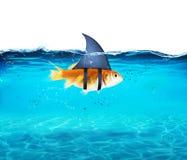 Goudvis die als haai dienst doen om de vijanden te terroriseren Concept de concurrentie en moed royalty-vrije stock foto's
