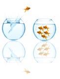 Goudvis die in aquarium springt Royalty-vrije Stock Fotografie