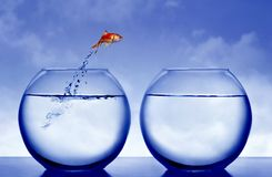 Goudvis die uit het water springt Stock Foto's