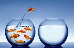 Goudvis die uit het water springt Stock Afbeelding