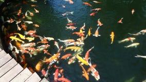 Goudvis in het water royalty-vrije stock foto