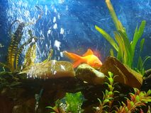 goudvis jagende diner Stock Afbeelding