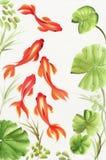 Goudvissen onder de lotusbloembladeren Stock Foto