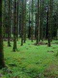 Gougane Barra Forest Park Royalty Free Stock Image