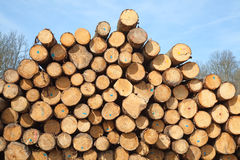Goujons en bois frais Photo stock