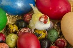 Gouldian finch między Wielkanocnymi jajkami zbliżenie obrazy stock