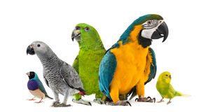 Goup of parrots Royalty Free Stock Images
