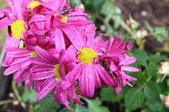 Goupille de fleurs images libres de droits