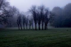 Gouping das árvores Fotografia de Stock Royalty Free