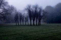 Gouping of Trees. A grouping of trees in the park at Woluwe, Belgium in the cold autumn mist royalty free stock photography