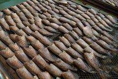 Gourami δερμάτων φιδιών ψάρια, Pla Salit Στοκ φωτογραφίες με δικαίωμα ελεύθερης χρήσης