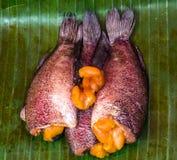 Gourami ψάρια Στοκ εικόνα με δικαίωμα ελεύθερης χρήσης
