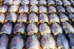 Gourami fish dry out Stock Photos