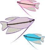 Gourami Fish. Illustrations clip-art vector eps Royalty Free Stock Image