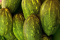 gourd золы Стоковые Фото