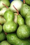 gourd младенца Стоковая Фотография