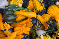 gourd предпосылки Стоковая Фотография