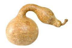 gourd смотря змейку Стоковое фото RF