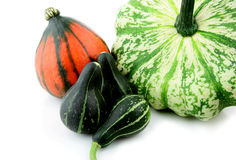 Gourd Royalty Free Stock Photo