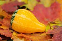 Gourd amarelo Imagem de Stock Royalty Free