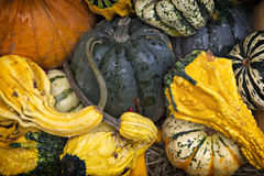 Gourd Background. Assorted,pumpkins, squash, and gourds in pile. A great Autumnal Background stock image