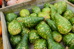Gourd Stock Images
