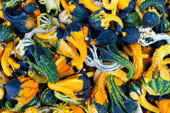 Gourd collection Stock Image