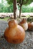 Gourd da queda imagem de stock