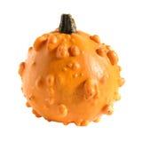 Gourd decorativo (polpa) Fotografia de Stock