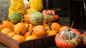 Gourd Display Stock Photos