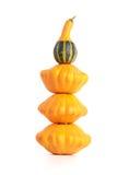 Gourd family. Stock Photo