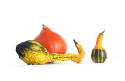 Gourd family. Stock Photography
