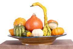 Gourd family. Royalty Free Stock Photos