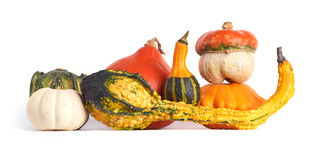 Gourd family. Stock Images