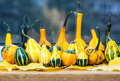 Gourd family waiting for halloween Stock Photography