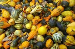 Gourd Fest Imagem de Stock