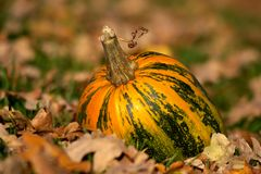 Gourd in a Garden Royalty Free Stock Images